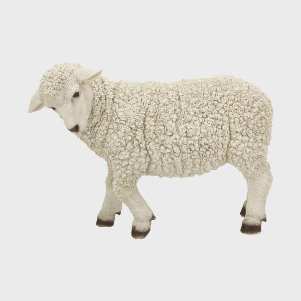 Krippenfigur Schaf stehend linksschauend 28cm groß
